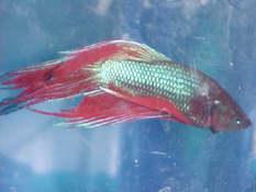 quakefish